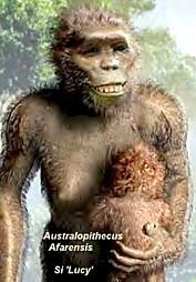 Australopithecus afarensis ,'